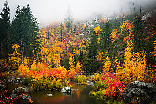 Autumn Colors Symphony by Dan Mihai