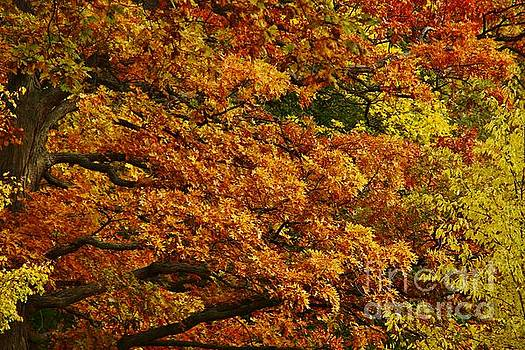 Autumn Colors by Tony Lee
