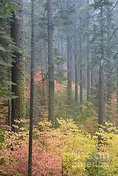 Autumn colour, Yosemite by Justin Foulkes
