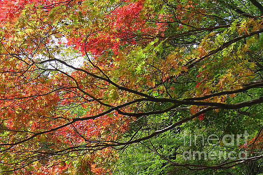 Autumn Colours by Anita Adams