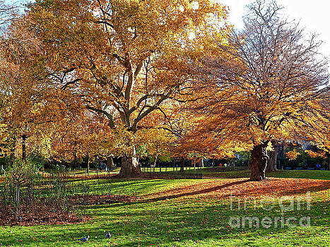 Autumn Colours in the Parc Monceau by Alex Cassels