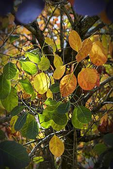 Jeremy Lavender Photography - Autumn Colours