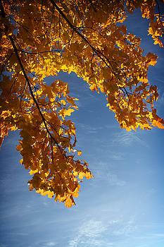 Autumn colours by Ken Myrk