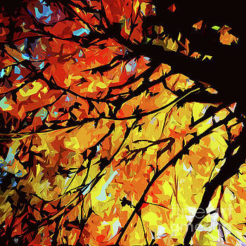 Autumn Colours by Neil Finnemore