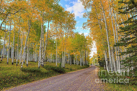 Autumn Country Road by Spencer Baugh