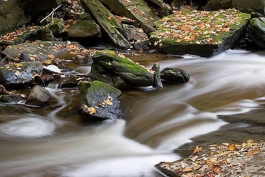 Autumn Creek by Carol Hathaway