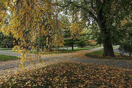 Autumn Crossroads by Cornelis Verwaal
