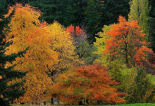 Autumn by Dennis Reagan