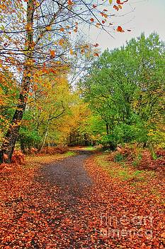 Autumn Dream by Vicki Spindler