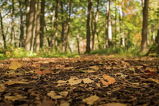 Autumn Dreams by Ken Mickel