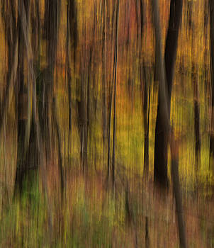 Autumn Echos in the Forest by Skyelyte Photography by Linda Rasch