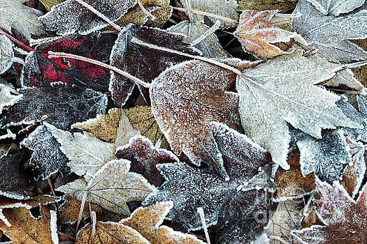 Autumn ends, Winter begins 1 by Linda Lees