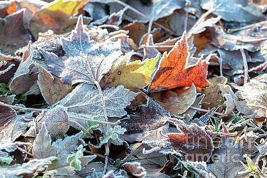 Autumn ends, Winter begins 3 by Linda Lees