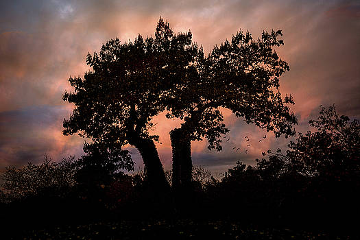 Chris Lord - Autumn Evening Sunset Silhouette