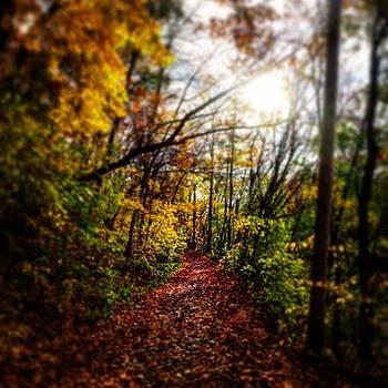 Autumn Hike by Sharon Halteman
