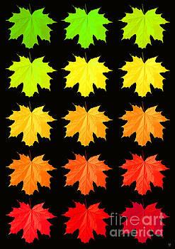 Autumn Falls by Neil Finnemore