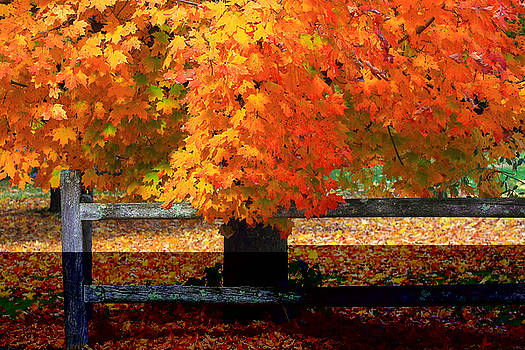 Autumn Fence by Brian Pflanz