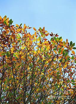 Autumn Flames - Original by Rebecca Harman