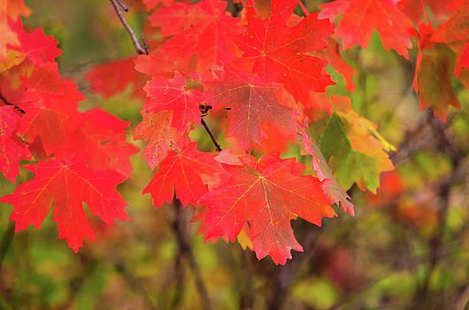 Autumn Flash by Bryan Carter