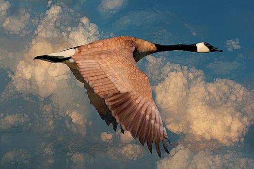 Autumn Flight by Jack Zulli