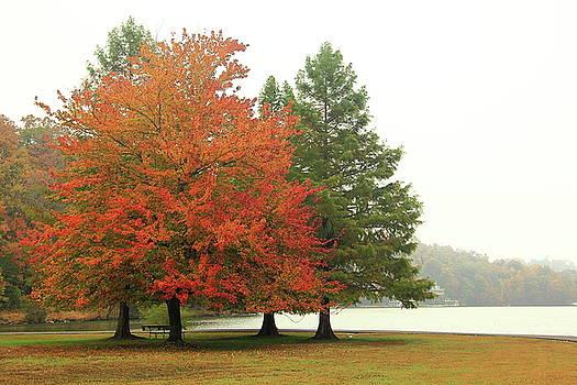 Allen Nice-Webb - Autumn Fog