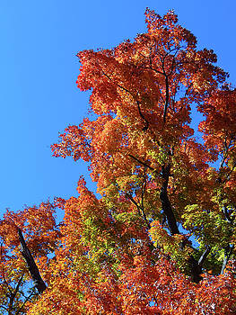 Autumn Foliage by Jamie Johnson
