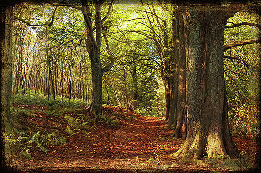 Angela Doelling AD DESIGN Photo and PhotoArt - Autumn Forest