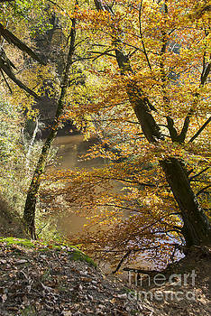Compuinfoto  - autumn forest