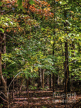Autumn Forest by Dragonfleyes Photography and Creations