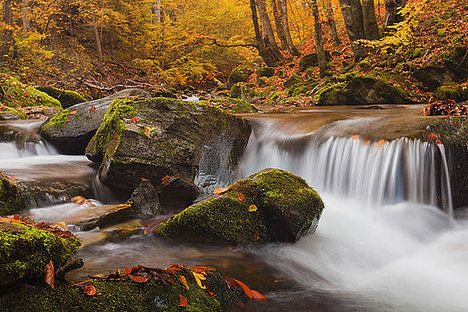 Autumn Forest by Evgeni Dinev