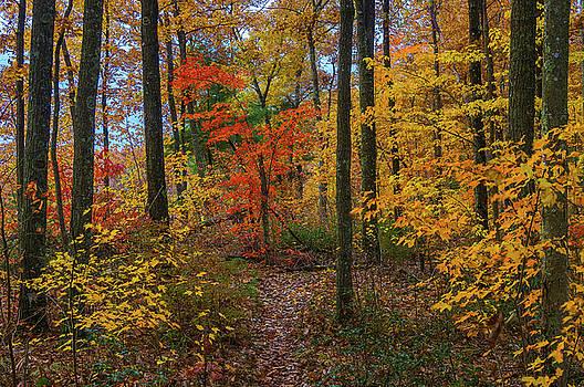 Autumn forest hike by Ulrich Burkhalter