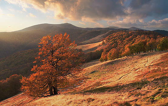 Autumn forest in Carpathian Mountains by Sergey Ryzhkov