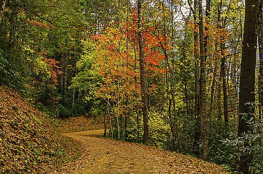 Autumn forest road. by Ulrich Burkhalter