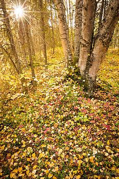 Autumn Forest Scene by Tim Newton