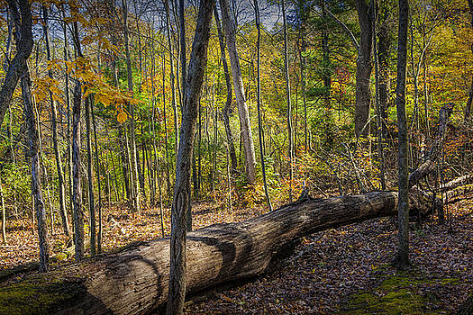 Randall Nyhof - Autumn Forest Scene with fallen Log