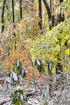 Autumn Forest with Snow  by Thomas R Fletcher