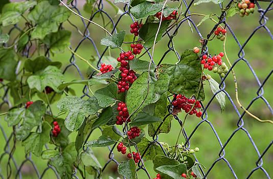 Autumn Fruit by Joan Bertucci