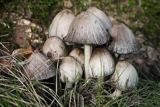 Autumn fungi by LesJardins Photography