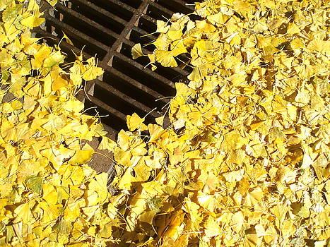 Autumn Ginkgo Leaves by M Blaze Wolenski
