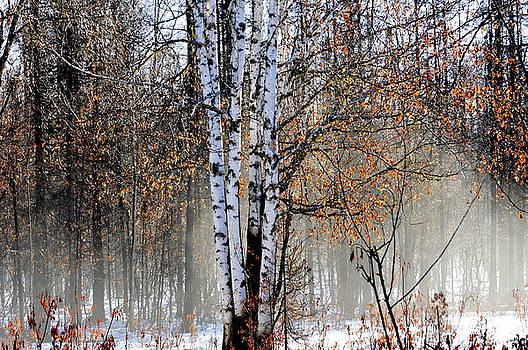 The Birches by Sherry McKellar