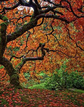 Autumn Glory by Rod Stroh