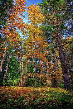 Autumn Glow In The Woods by Rick Berk