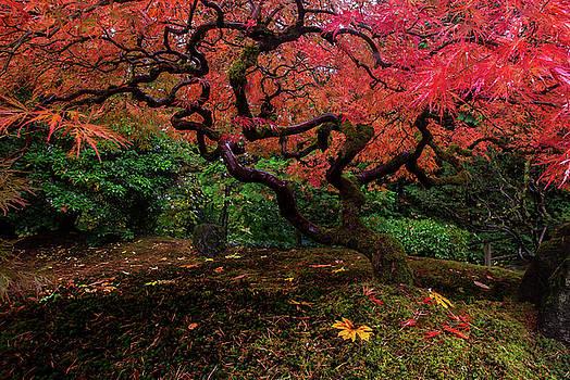 Autumn Glow by Ryan Smith