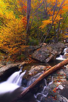Autumn Gold by Everett Houser