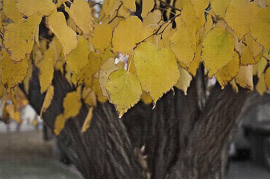 Steve Ohlsen - Autumn Gold