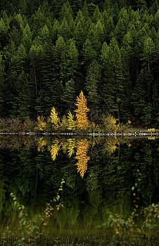 Autumn Gold // Whitefish, Montana  by Nicholas Parker