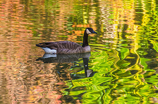 Autumn Goose by Rob Nelms