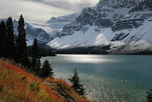 Reimar Gaertner - Autumn grass and Crowfoot mountain glacier at Bow Lake