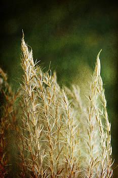 Autumn Grass by Margaret Hormann Bfa