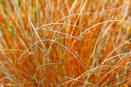 Art Block Collections - Autumn Grass Abstract